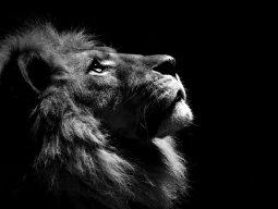 lionking23