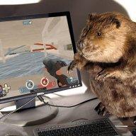 Beaverbeliever
