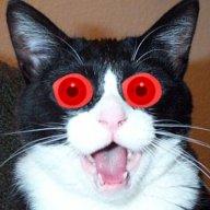 The Angry kat