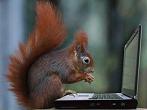 mypetsquirrel