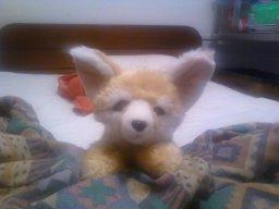 foxwillow