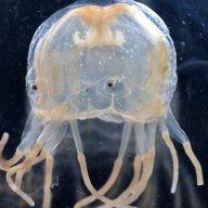 eyedjellyfish78