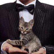 CatButler