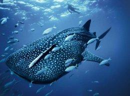sexypotatofish