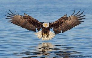EagleX21